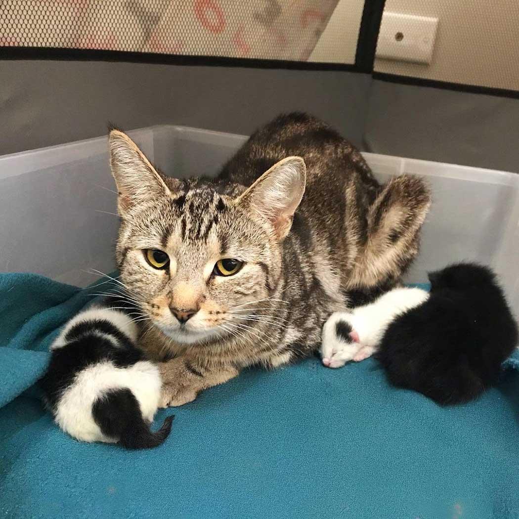 Gata que se recuperó junto a su gatito y adopta dos más