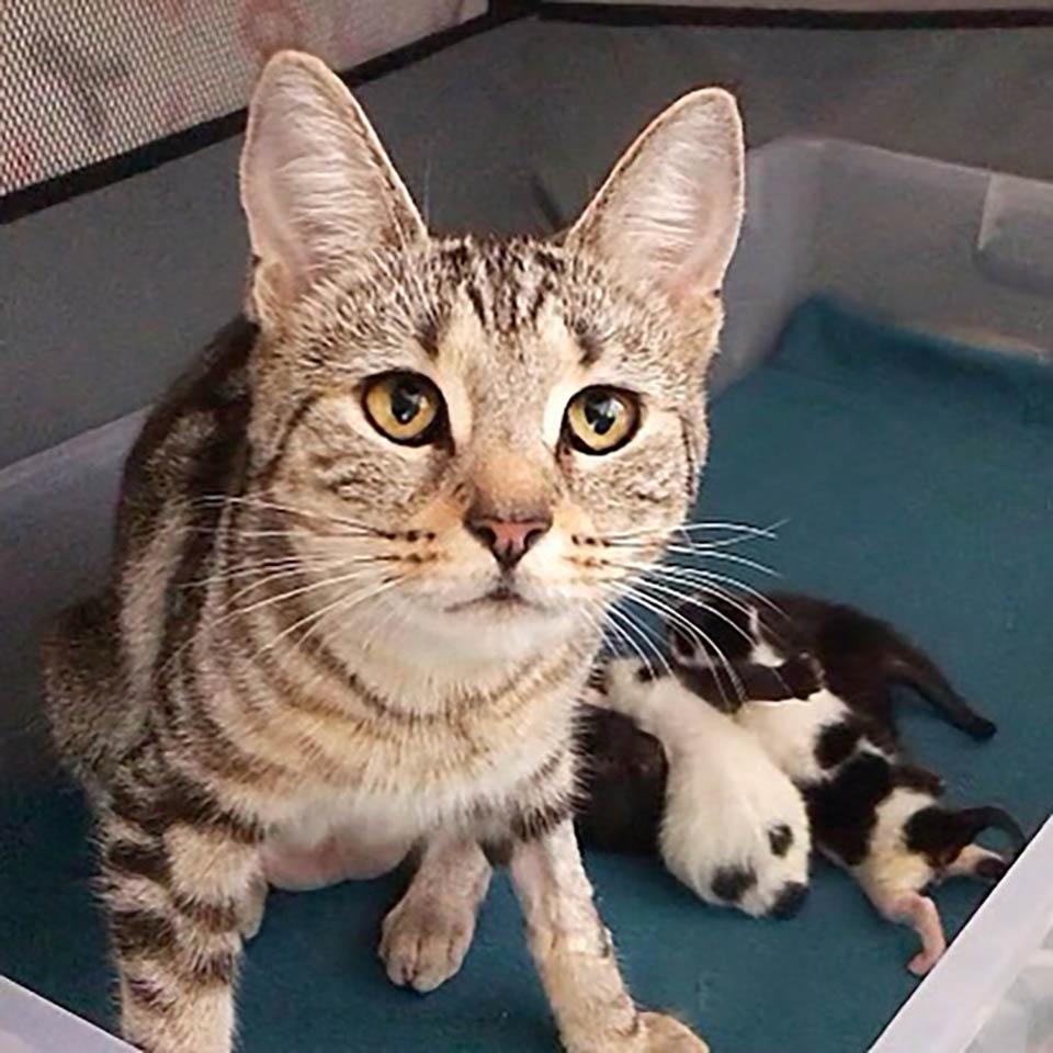 Gata que se recuperó junto a su gatito
