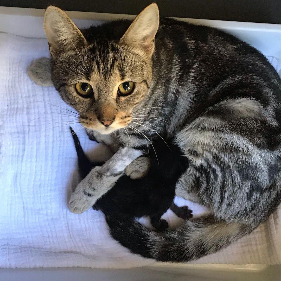 Gata se recuperó junto a su gatito