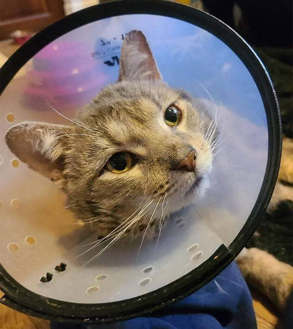 Chuck visita veterinario