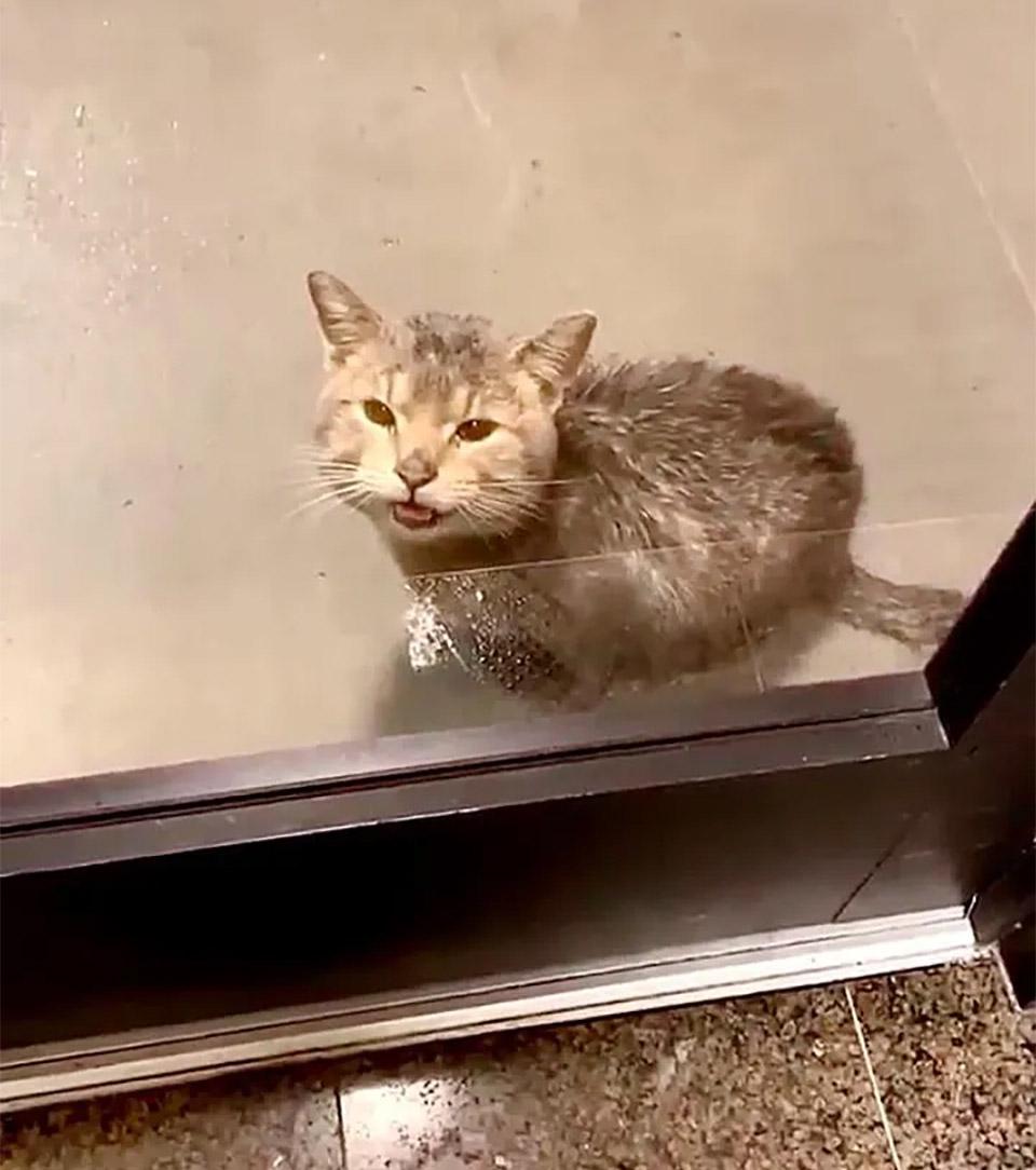 Gato aparece puerta